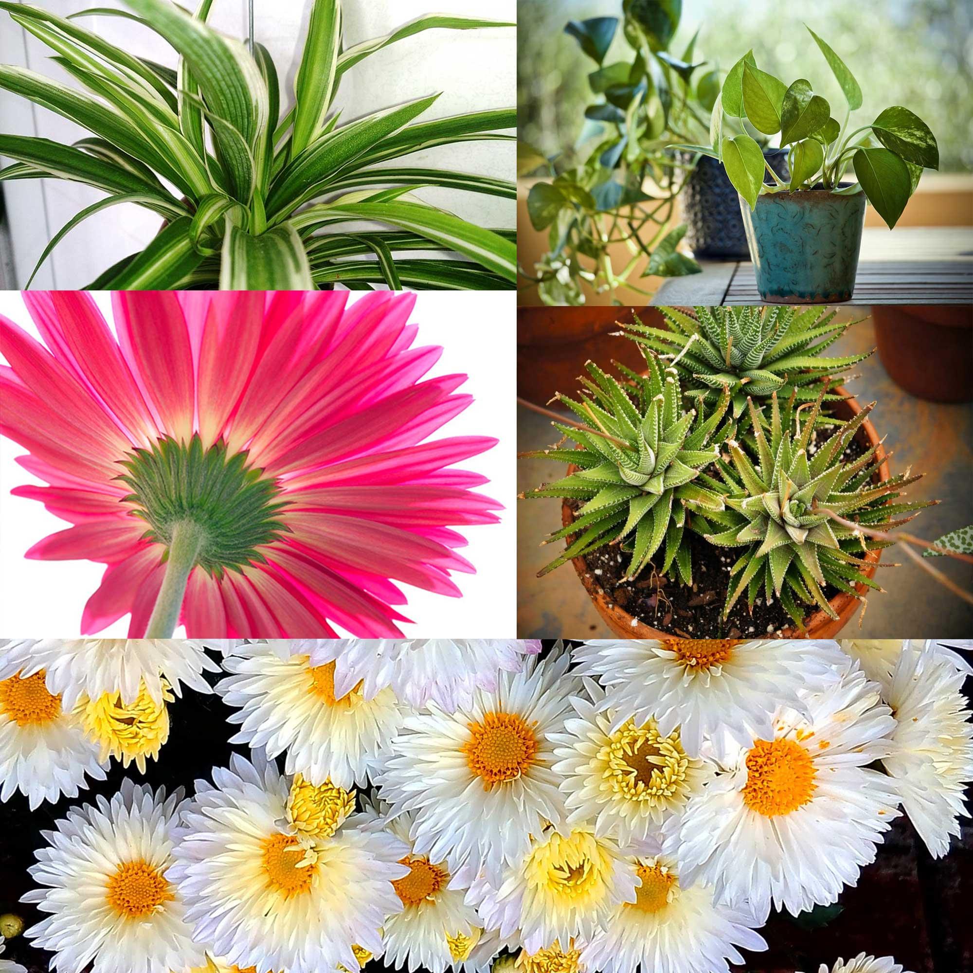 10x Beste Luchtzuiverende Planten voor Binnen | Gewoon Lekker Groen